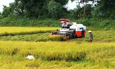Kinh tế tuần hoàn trong nông nghiệp - Xu hướng nông nghiệp bền vững
