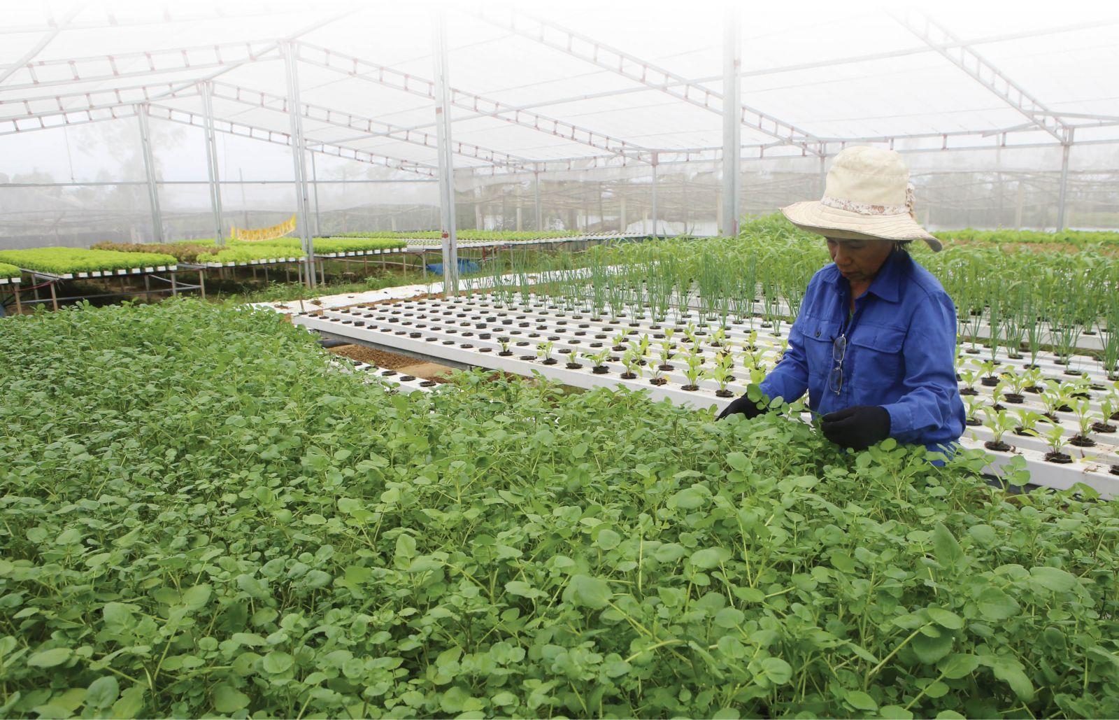 Tái cơ cấu theo hướng nông nghiệp tuần hoàn, hữu cơ